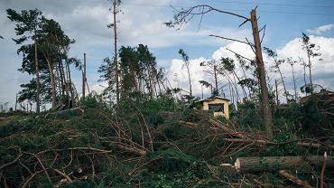 Drzewa połamane przez nawałnicę (zdjęcie ilustracyjne)