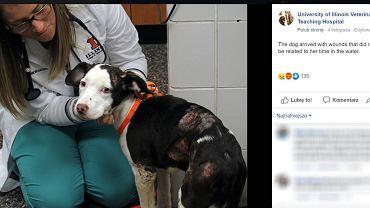 Pies uratowany przez nauczyciela w USA. Zwierzę zostało zamknięte w klatce i wrzucone do jeziora.