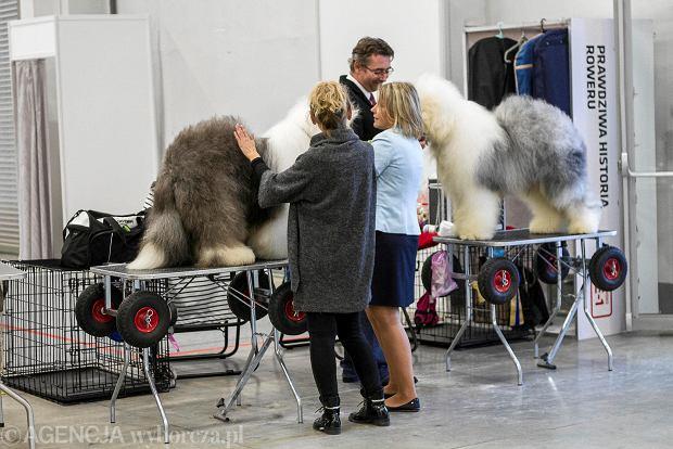 W Targach Kielce o psach i nie tylko