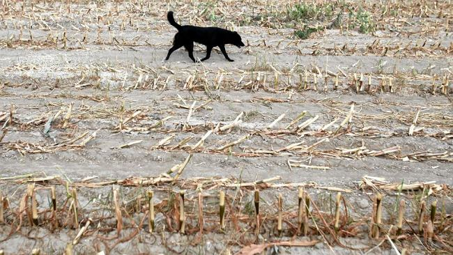 Rząd chce ratować rolników przed suszą. Nawet 100 tys. zł dotacji na nawadnianie
