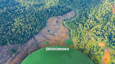 Las, fragment wycięty pod uprawy rolne.