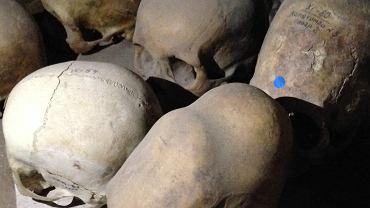 Czaszki znalezione w Uzbekistanie z okresu kultury Baktryjsko-Margiańskiego Zespołu Archeologicznego z epoki brązu sprzed 4 tys. lat. Naukowcy pobrali z nich DNA do badań azjatyckich migracji Homo sapiens