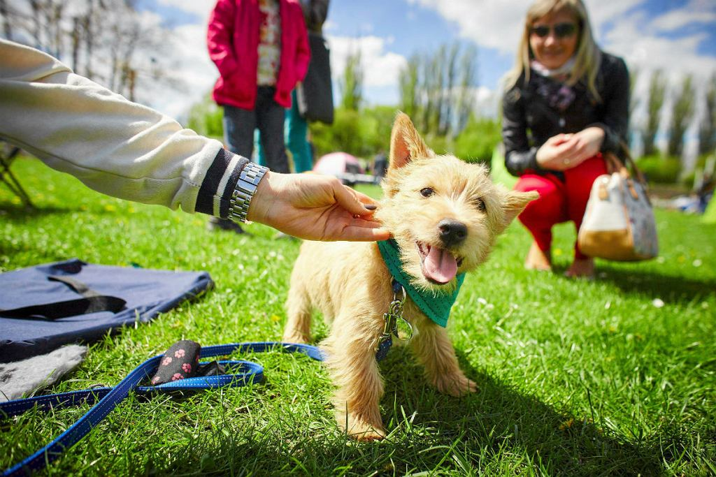Nort Terrier