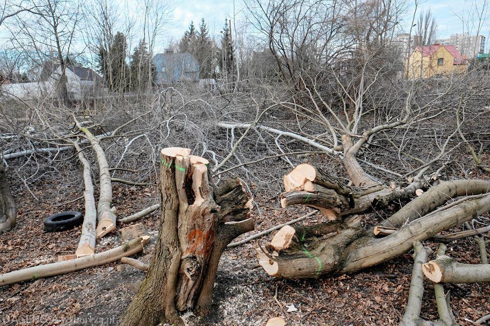 Wycięte drzewa na Starołęce
