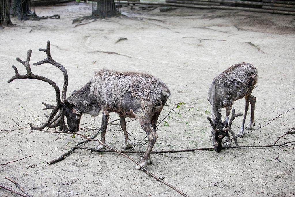 W krakowskim zoo
