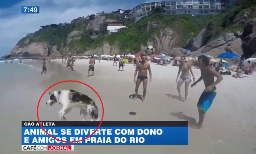 Pies grający w piłkę na brazylijskiej plaży