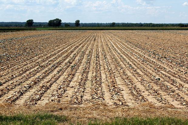 Susze doskwierają rolnikom i sadownikom