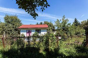 Jak kupić ogródek działkowy w mieście albo domek letniskowy poza miastem? Popyt wzrósł, ceny też