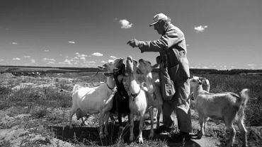Brucelozą można się zarazić poprzez kontakt ze zwierzętami np. kozami