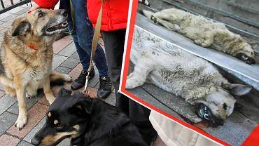 Obrońcy praw zwierząt od wielu lat podkreślają, że jedynym sposobem walki z bezdomnymi psami jest ich sterylizacja