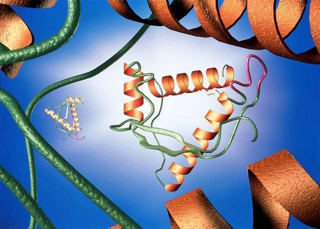 Przestrzenna struktura białka prionu