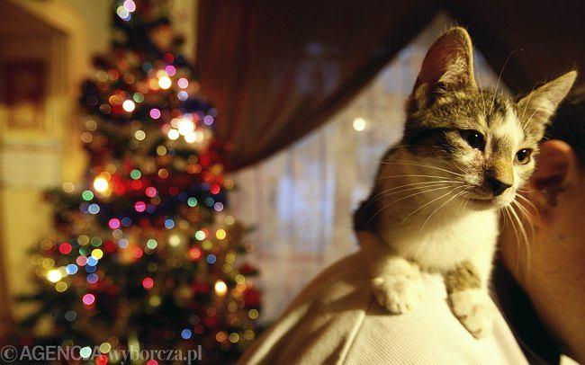 Świąteczny kot