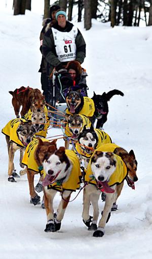 psie zaprzęgi,maszer,Yukon Quest