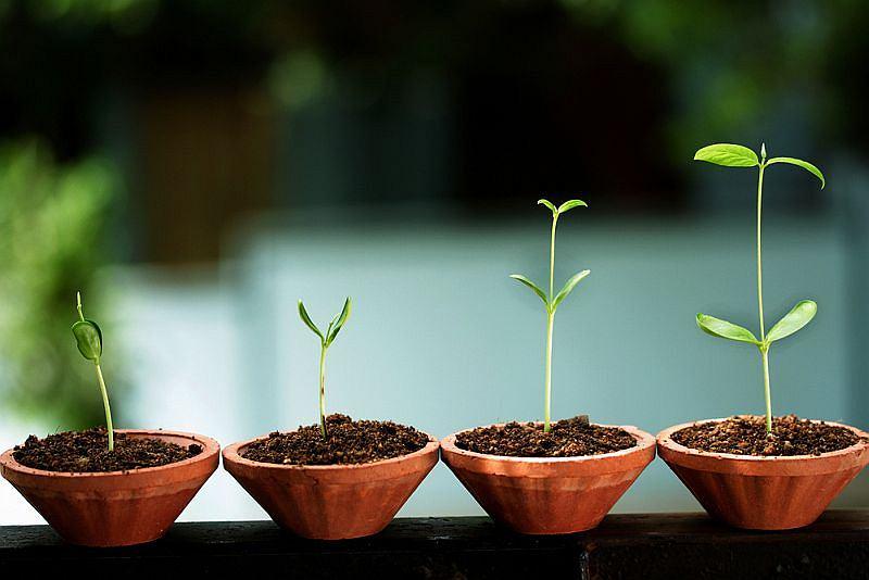 Rozwój, wzrost