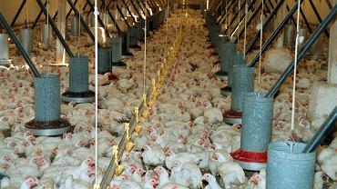 Po brexicie wrócić mogą kontrole graniczne, na których sprawdza będzie jakość żywności.  Świeże mięso drobiowe nie będzie mogło być dostarczone