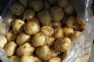 Jak kupić polskie młode ziemniaki i nie dać się oszukać? Jak je dobrze wykorzystać? Podpowiadamy