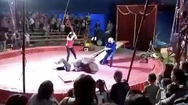 Niedźwiedź atakuje trenera w cyrku