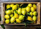 Jak przechowywać cytryny, aby zachować ich właściwości?