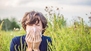 Co pyli w czerwcu? Jest to ważna informacja dla wszystkich alergików. Zdjęcie ilustracyjne, Elizaveta Galitckaia/shutterstock.com