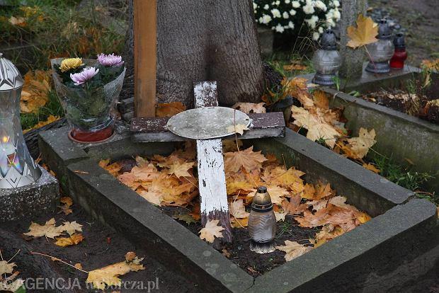Zdjęcie numer 1 w galerii - Wszystkich Świętych we Wrocławiu. Cmentarze w kwiatach [ZDJĘCIA]