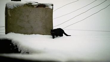 Miejski kot zimą