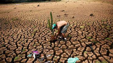 """Brazylijski artysta i działacz społeczny Mundano sadzi kaktusy w popękanej ziemi - tworząc instalację """"Pustynia Cantareira"""". (Cantareira to zalew przy tamie Atibainha - drugi z trzech awaryjnych zbiorników zapewniających zaopatrzenie w wodę mieszkańcom Sao Paulo - opróżniony w trakcie katastrofalnej suszy)"""