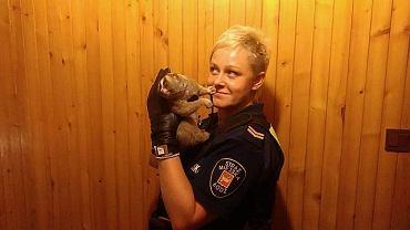 Animal Patrol w Łodzi