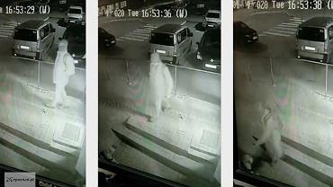 W Poznaniu mężczyzna zaatakował psa gazem pieprzowym