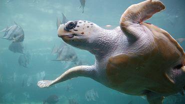 Polacy utknęli na Zakyntos z powodu żółwi