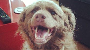Zadowolony z życia pies (Fot. Miss Olgu)