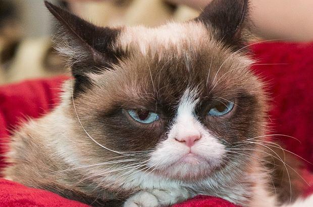 Grumpy Cat nie żyje. Kot, którego wyraz pyszczka znają miliony ludzi na świecie, miał 7 lat.