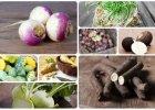 Czarna rzepa, kalarepa, wężymord - zapomniane warzywa, które warto odkryć na nowo
