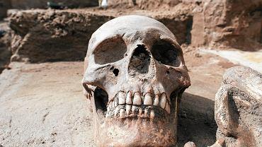 szkielet (zdjęcie ilustracyjne)