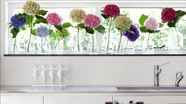 Małe, szklane wazoniki ustawione w rzędzie na parapecie, a w nich duże, pojedyncze kwiaty kolorowych hortensji. Idealna wiosenna aranżacja.