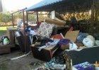 Plaga pluskiew na Bielanach. Mieszkańcy masowo wyrzucają meble
