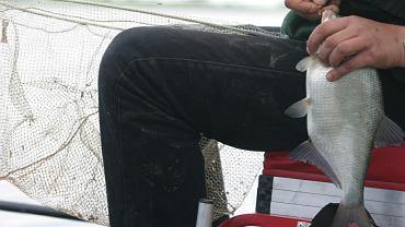 Wędkowanie - złowiony leszcz - zdjęcie ilustracyjne