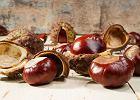 Maść z kasztanowca: czy pomaga na żylaki i siniaki?