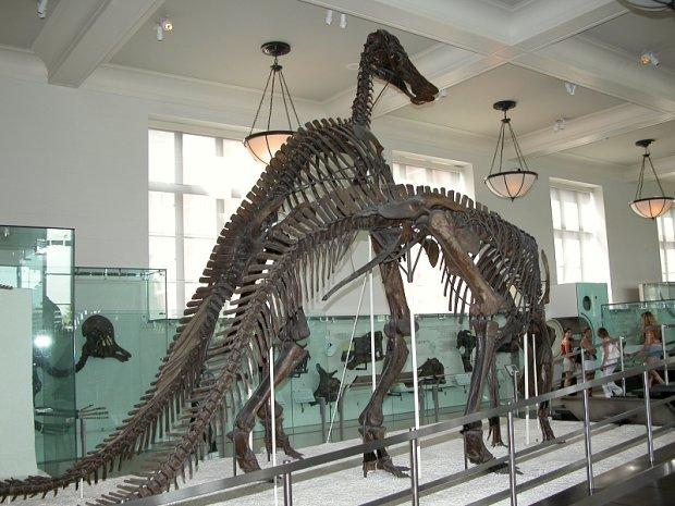Muzeum Historii Naturalnej, Nowy Jork/ Fot. CC BY SA 2.5/ Fritz Geller-Grimm/ Wikimedia Commons