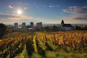 Słowacja Bratysława. Bratysławskie wino