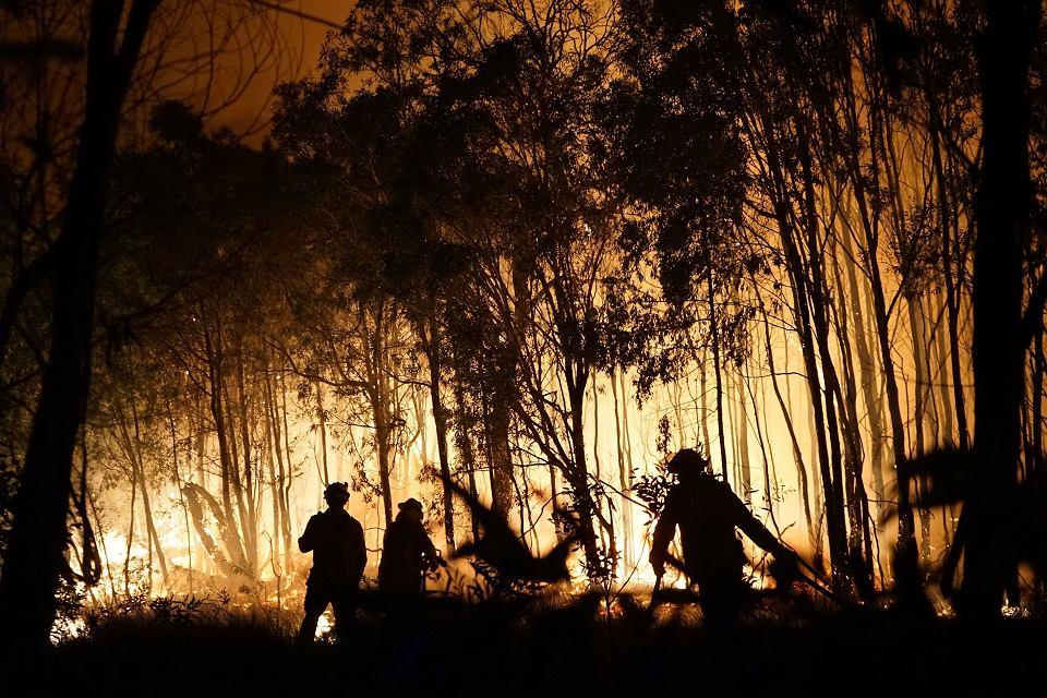 Strażacy walczą z pożarem buszu w stanie Queensland