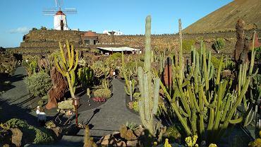 Lanzarote (Wyspy Kanaryjskie). Jardin de Cactus - ogród kaktusów (atrakcja na wschodzie Lanzarote)