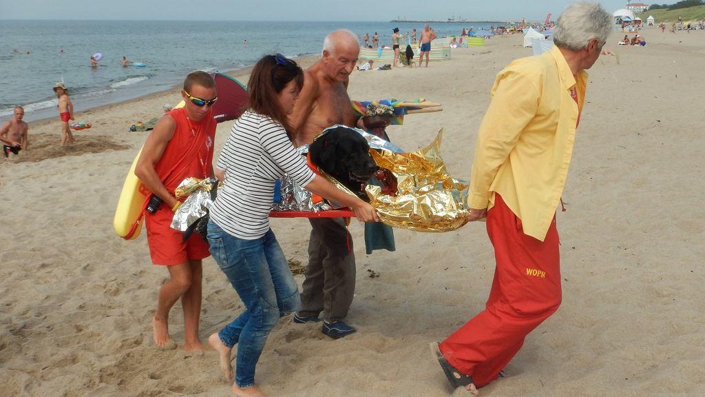 Ratownicy WOPR pomogli psu na plaży