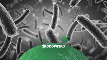 Bakterie (zdjęcie ilustracyjne)