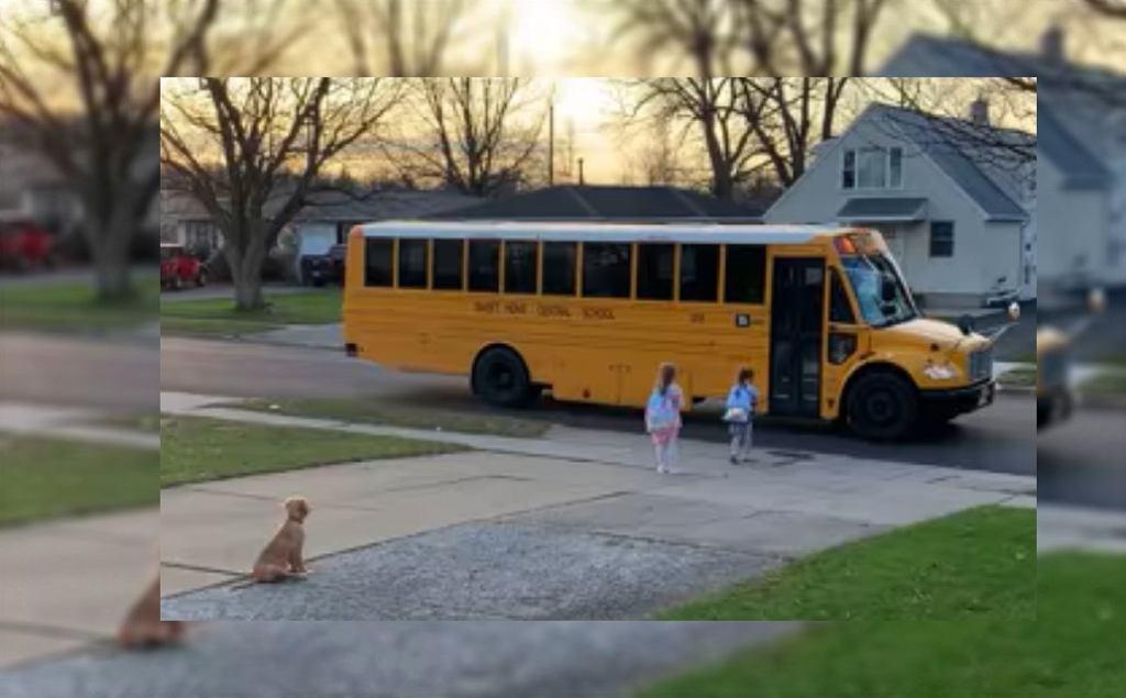 Psi patrol? Każdego ranka odprowadza swoje dzieci na autobus