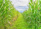 Zbliżamy się do momentu, gdy żywności zabraknie. Trzy firmy opanują światowy rynek
