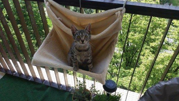 Kot Zakleszczył Się W Oknie Mieszkańcy Rzucili Się Na Pomoc