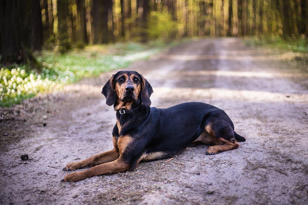 Zaginął pies o imieniu Łyna. Od 5 marca ślad po zwierzaku zniknął. Trwa wielka akcja poszukiwawcza.