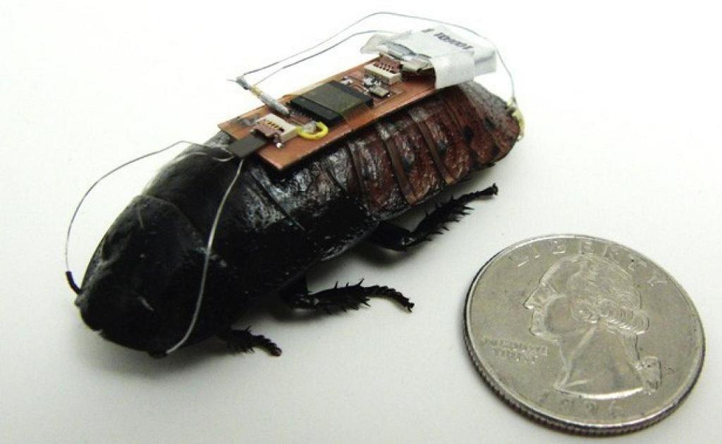 Karaluch madagaskarski zmieniony w bionicznego robota posłusznego rozkazom naukowców