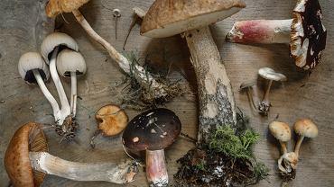 grzyby jadalne