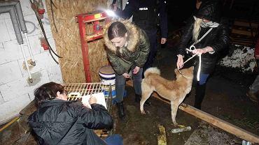 Pogotowie dla Zwierząt i policja 7 grudnia interweniowali w pseudohodowli psów w Murowańcu
